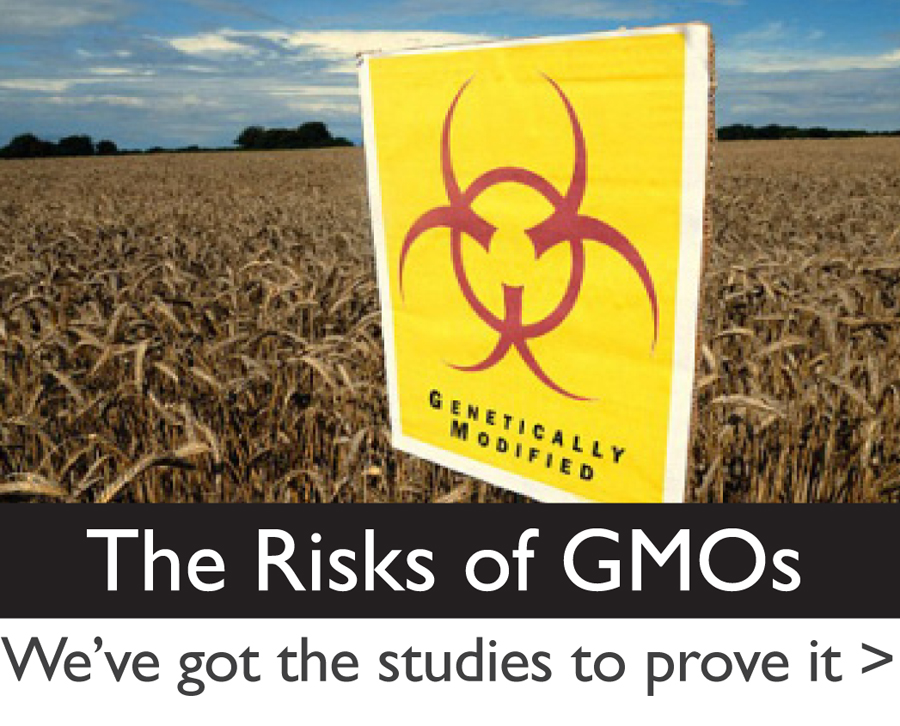 The Risks of Genetic Engineering and Genetically Modified Organisms