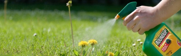 sprayweeds roundup