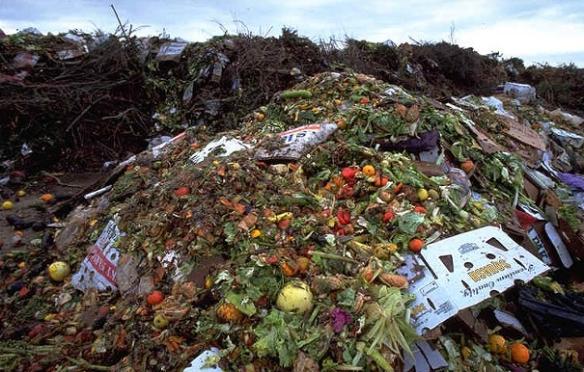 food in dump