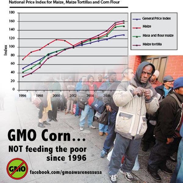 GMO corn not feeding poor