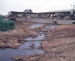 CAFO waste stream