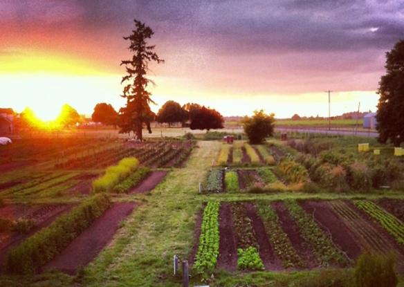 Farm fields sunset