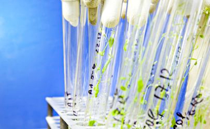 Plant test tube GMO genetic engineering