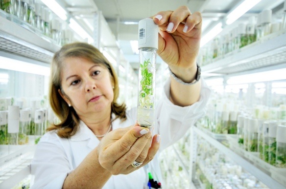 Scientist with plant sample