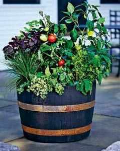 patio-container-vegetable-tomato-garden